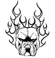 head dog pitbull with fire vector image