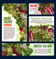 salad leaf and vegetable greens banners vector image vector image