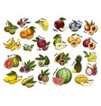 sketches of fruit food agriculture theme vector image
