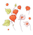set in style hand drawing twig physalis vector image vector image