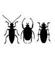 silhouettes of beetles - icons of insects outline vector image vector image