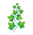 sprig of ivy vector image vector image