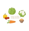 Vegetables food cellulose set vector image vector image