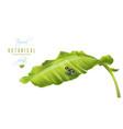 banana frog banner vector image vector image