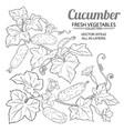cucumber plant set on white background vector image