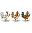 Group of roosters vector image vector image