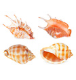 Sea Shell Icon Set vector image vector image