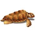 A loggerhead sea turtle vector image