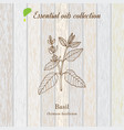 basil essential oil label aromatic plant vector image vector image