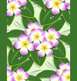 pink plumeria flower pattern seamless on green vector image vector image