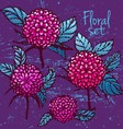 Colored ink chrysanthemums collection vector image