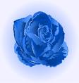 Flower blue rose beautiful rose simple vector image vector image