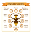 Infographic placard about benefits of honey vector image vector image