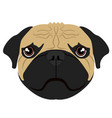 isolated pug avatar vector image vector image