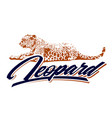 leopard design vector image