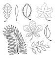 different leaves contour plot vector image vector image