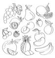 Doodle fruit vector image
