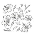 hand drawn elegant hibiscus vector image vector image