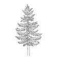 hand drawn sketch spruce vector image vector image