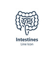 human internal organ intestines and colon vector image