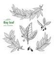laurel bay leaf collection