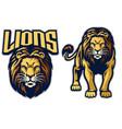 lion sport mascot in set vector image vector image
