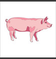 pig side view color vector image
