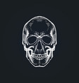 skull in engraving style vector image vector image