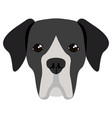 great dane avatar vector image