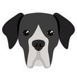 great dane avatar vector image vector image