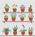 indoor plants on shelves attached to brick wall vector image vector image