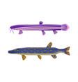 brook trout unusual fish set vector image vector image