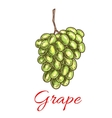 Grape bunch of green white grapes Sketch icon vector image vector image