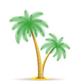 palm tree 15 vector image vector image