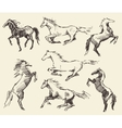Set hand drawn horses sketch vector image vector image