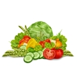 Vegetables mix on white vector image vector image