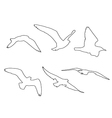 paths seagull set on white background vector image vector image