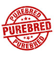 purebred round red grunge stamp vector image vector image