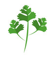 coriander leaves icon vector image vector image