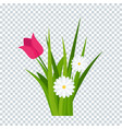 daisies and tulips in green grass on transparent vector image vector image