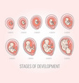 embryo month stages of development vector image