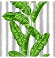 Seamless pattern with banana leaves Image of vector image