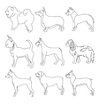 Set of purebred dogs in linear style vector image vector image