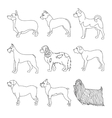 Collection of breeds dog in line vector image vector image