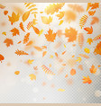 effect of autumn falling leaves layer with shallow vector image vector image