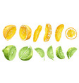 fruit set with lime and orange in halves and vector image vector image