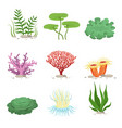 sea aquatic fauna underwater plants and corals vector image vector image
