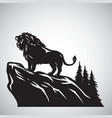 wild lion snarling roaring on a hill icon vector image vector image