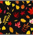 autumn leaves falling from trees foliage and vector image