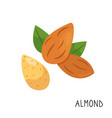 cartoon flat almond isolated on white background vector image